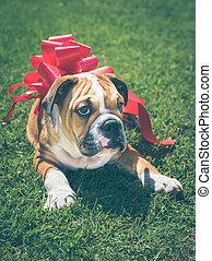 Bulldog for the present