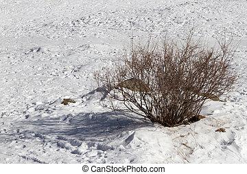 bush plant winter