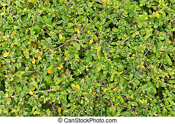 Bush seamless texture, background