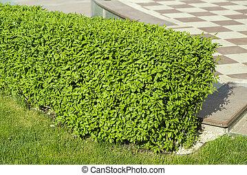 bushes in landscape design