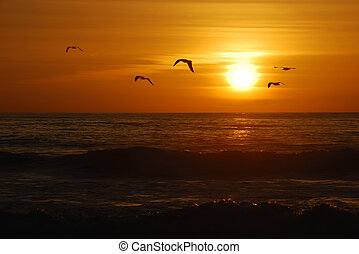 Seagulls flying over the Pacific coast in California in sunset.