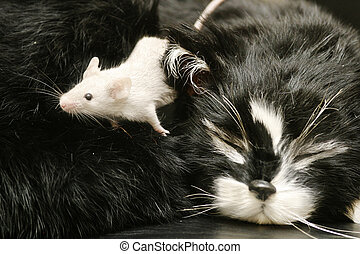 A mouse crawling over a sleeping cat.