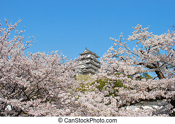 Cherry blossoms with castle in far background