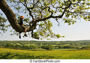 Child in a tree enjoying the view