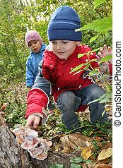 children explore shelf fungus
