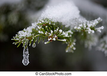 christmas evergreen pine tree covered with fresh snow