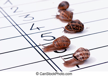 finish of racing snails