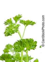 Close up of blurred chervil sprigs against a white background