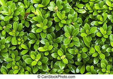 close up of bush plant