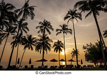 Coconut palms on sand beach in tropic on sunset