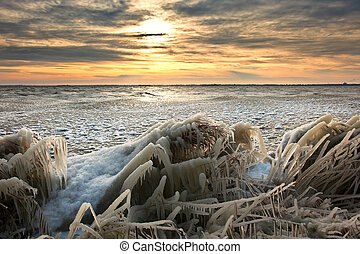 cold winter sunrise landscape with reed covered in ice