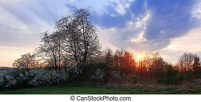 Colorful dramatic sunset with big clouds and trees.