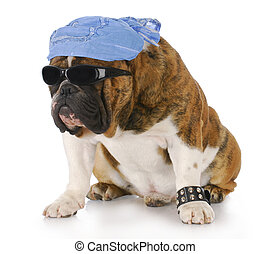 dog wearing skull cap and cool sunglasses with reflection on white background
