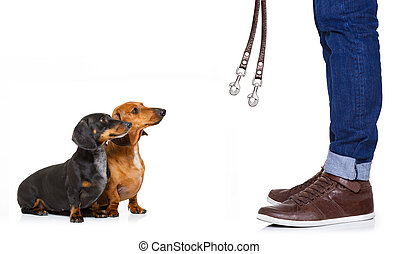 couple of dogs and owner with leash