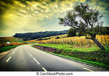 Curvy road at autumn sunset. Alsace, Wineroad