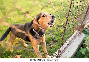 Cute guard dog behind fence, barking, checking you out