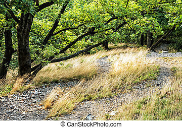 Deciduous forest in summer, dry grass and green trees