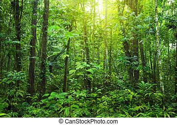 Tropical dense forest with morning sunlight shine on to it.