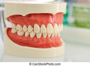 Dental jaw