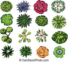 Different kind of plants