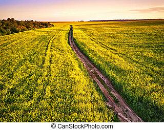 Dirt Road in canola Flowering Field, spring sunrise.