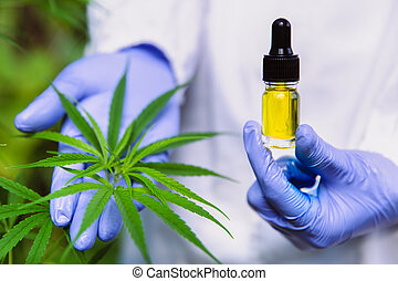 doctor hand holding bottle of Cannabis oil against Marijuana plant, CBD oil pipette. Cannabis recipe for personal use, legal light drugs prescribe.