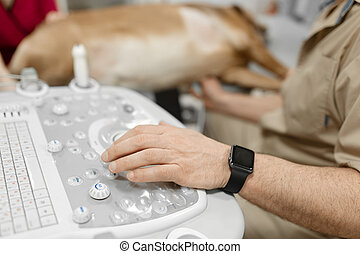 Doctor veterinarian makes ultrasound and cardiogram of the dog's heart in the office. The hand of a male doctor on an ultrasound machine closeup