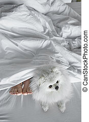 Dog and his sleeping owner in bed