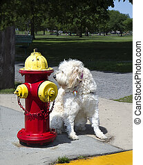 Dog By Fire Hydrant