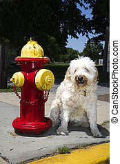 Dog Sitting Next to Fire Hydrant