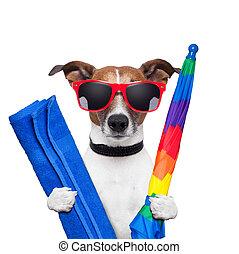 dog summer holidays umbrella and towel