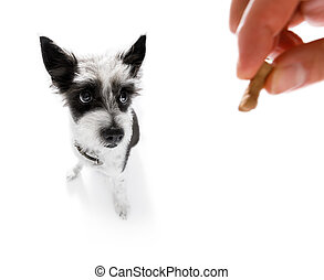 dog treat with owner
