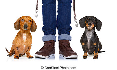 dogs and owner with leash