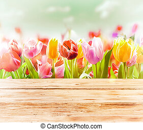 Dreamy spring background of colourful tulips