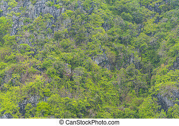 dry tropical forest