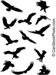 Eagle bird fying silhouette