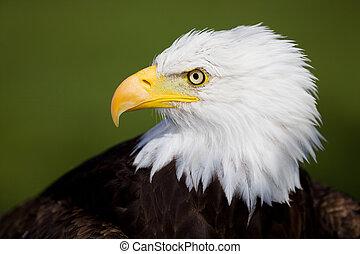 Eagle detail