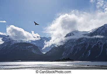 Eagle flying over the Chilkat Inlet