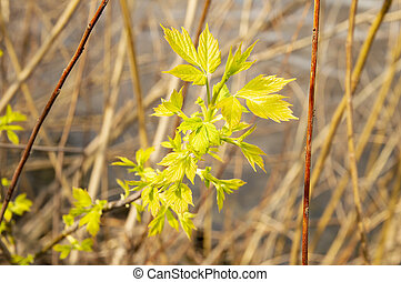 Earth Day - spring shoots of plants