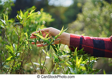 Female hand of young woman on a walk in forest in summer nature.