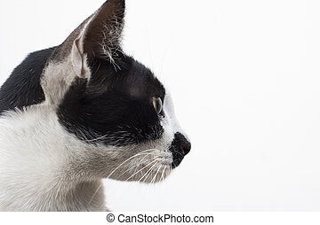 side view of cat head on white