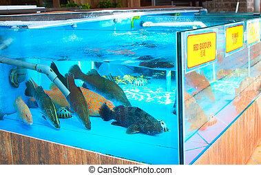 Lots of live fish in aquarium at seafood restaurant