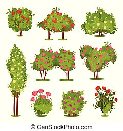 Flat vector set of roses bushes. Flowering garden plants. Green shrubs with beautiful flowers. Landscape elements