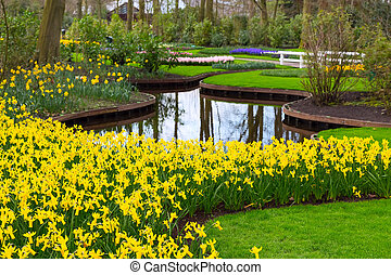 Flowerbed with yellow daffodil flowers blooming in spring
