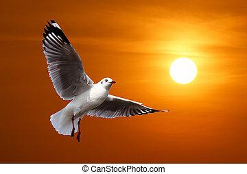 flying seagull on beautiful sunset background
