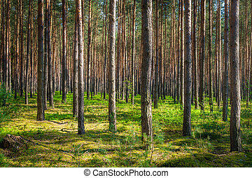 Forest in Poland