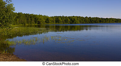 A forested shoreline of a lake in the North woods of Minnesota