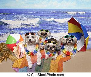Four Dogs on a Beach