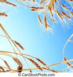 Frame of Wheat Ears against Clear Blue Sky