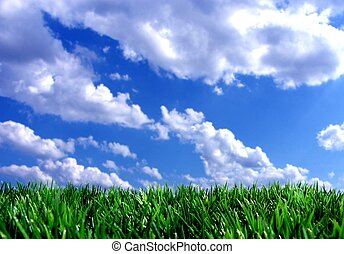 fresh green gras with blue sky